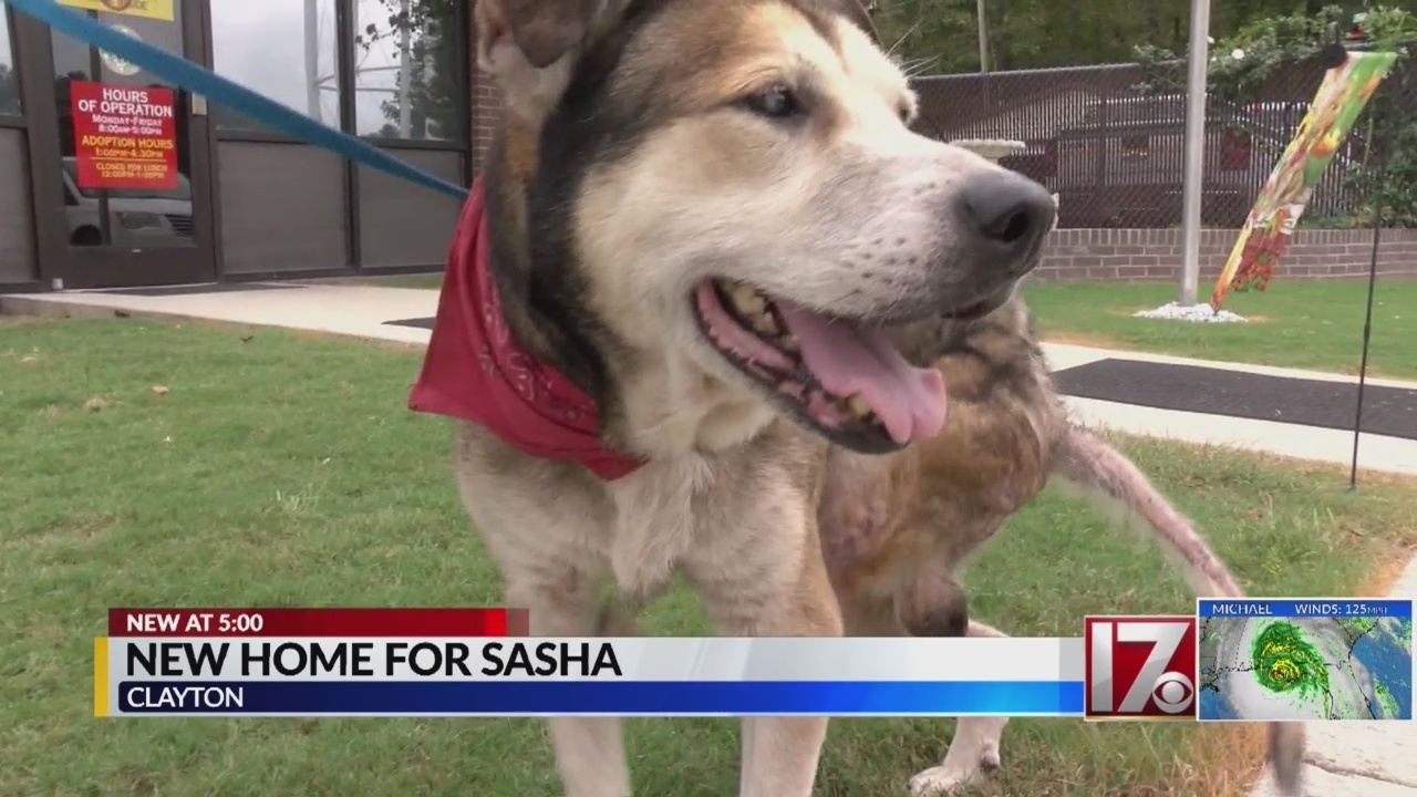 Steak-loving dog abandoned in Johnston County to have forever home