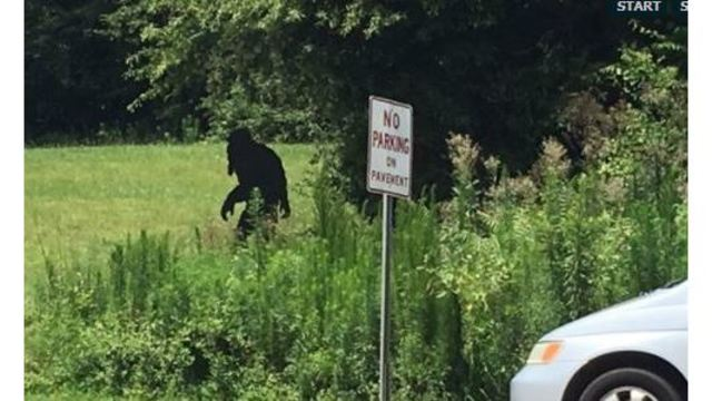sc police ask residents not to shoot bigfoot after nc sighting