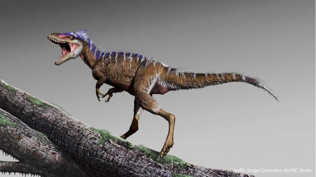 NC State researcher discovers new, smaller relative of Tyrannosaurus Rex