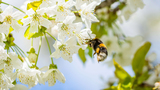Three ways to keep pollen from getting into your home